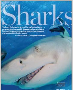 Shark Cover Story